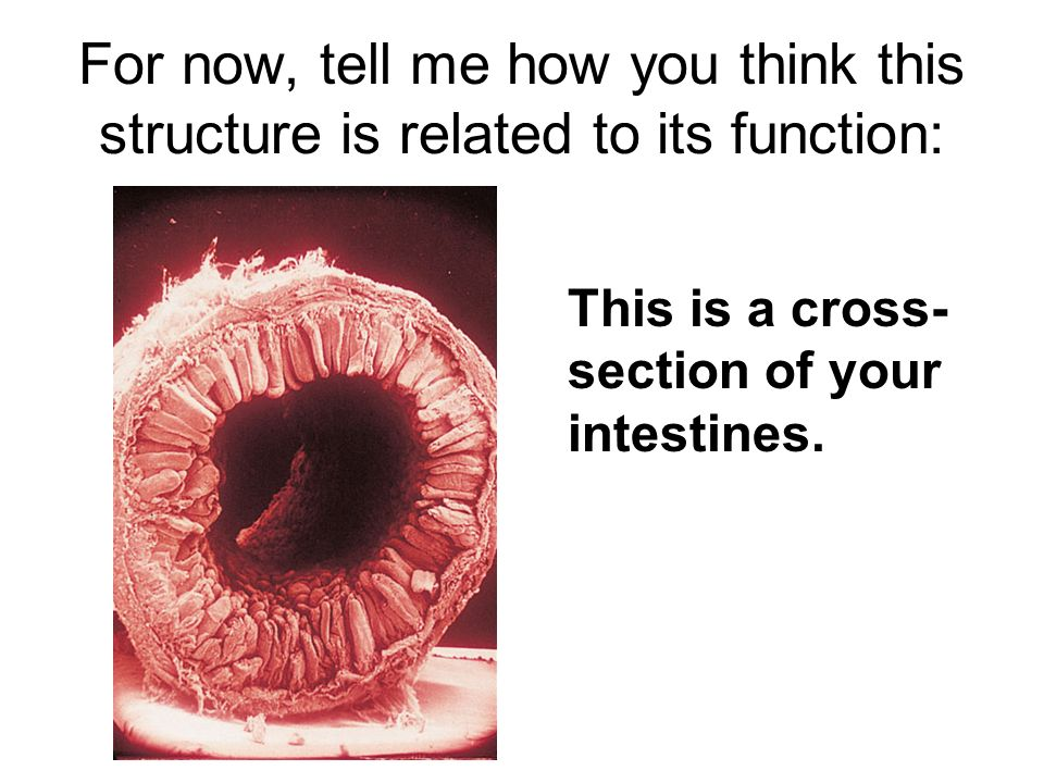 how to tell if its a function