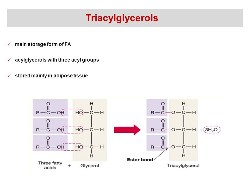 Synthesis and degradation of fatty acids - ppt video online download