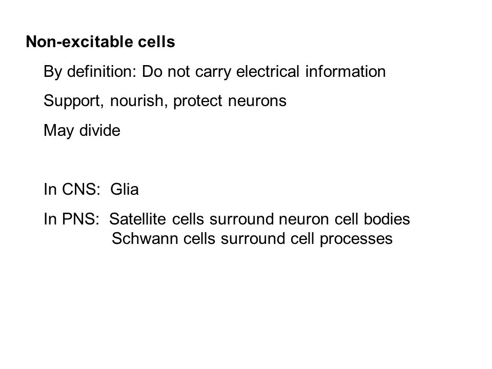 Beautiful Non Excitable Cells By Definition: Do Not Carry Electrical Information.  Support, Nourish