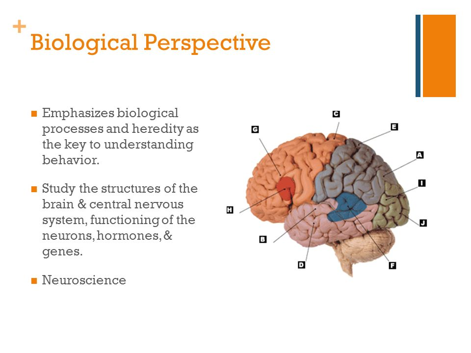 biological perspective The neuroscience/biological perspective relates to the way that people act in terms of how they came to be with this perspective, genetics in the human body affect the way that they react to certain situations or the way that they act in different situations.