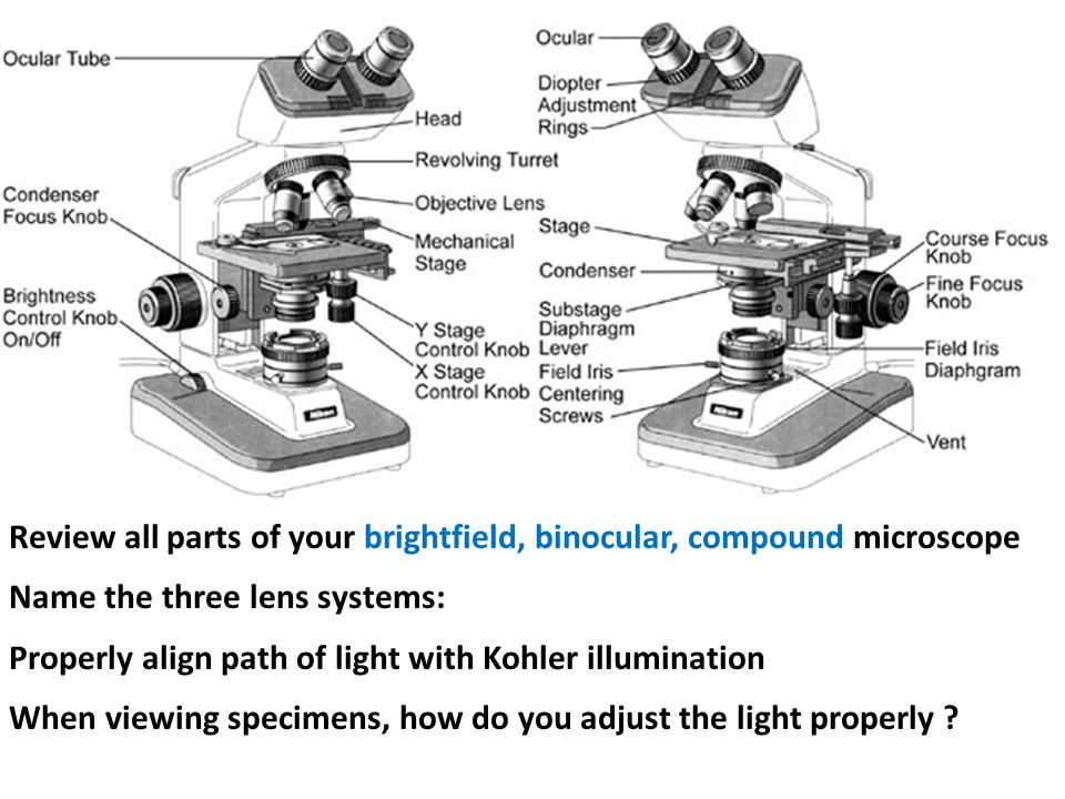 Exercise 2 review of microscope use and care ppt download review all parts of your brightfield binocular compound microscope ccuart Image collections