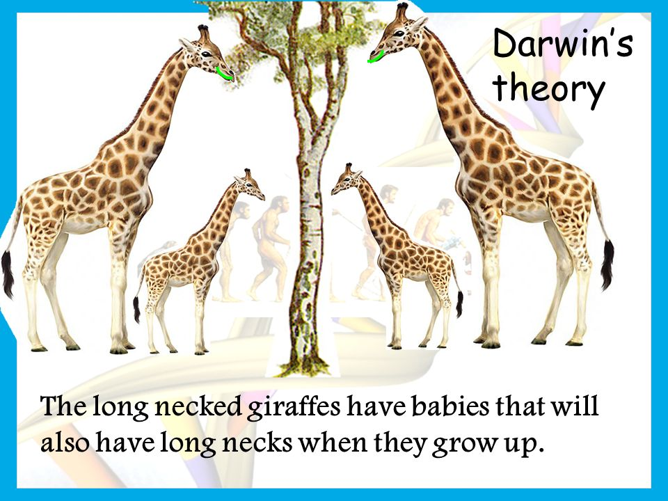 Chapter 15 – Evolution: Theory & Evidence - ppt video ...