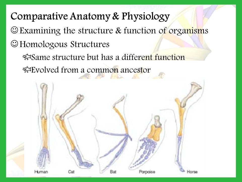 Comparative anatomy ppt