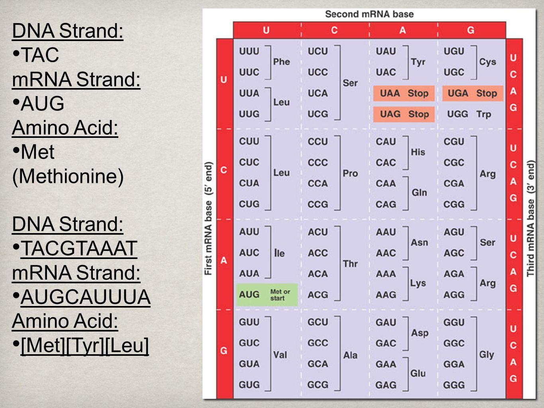 RNA 2 Translation.