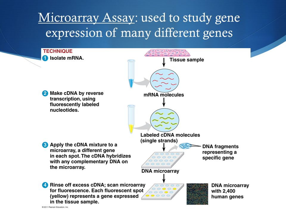 a study on genetic engineering Genetic engineering (ge) is a highly complicated and advanced branch of science which involves a wide range of techniques used in changing the genetic material in the dna code in a living organism.