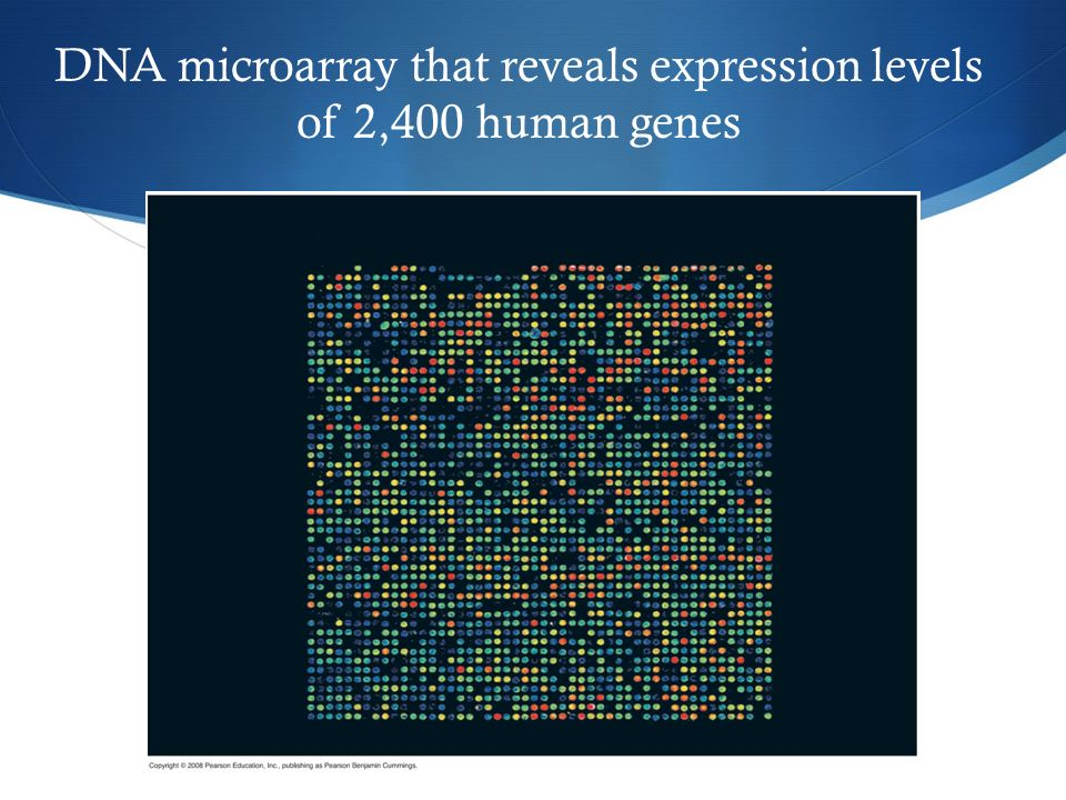 DNA microarray that reveals expression levels of 2,400 human genes