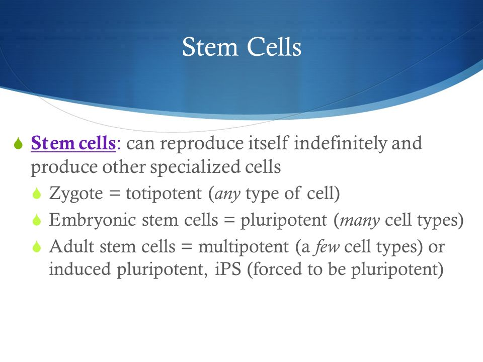 Stem Cells Stem cells: can reproduce itself indefinitely and produce other specialized cells. Zygote = totipotent (any type of cell)