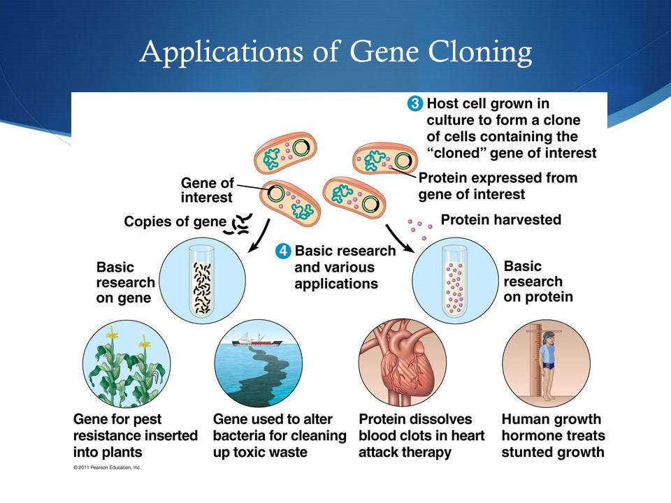 Applications of Gene Cloning