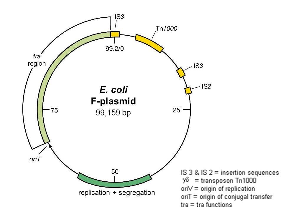 E Coli Diagram Plasmid Download Philosophy Of...