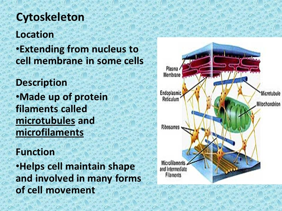 two catagories for distinguishing cell type ppt video