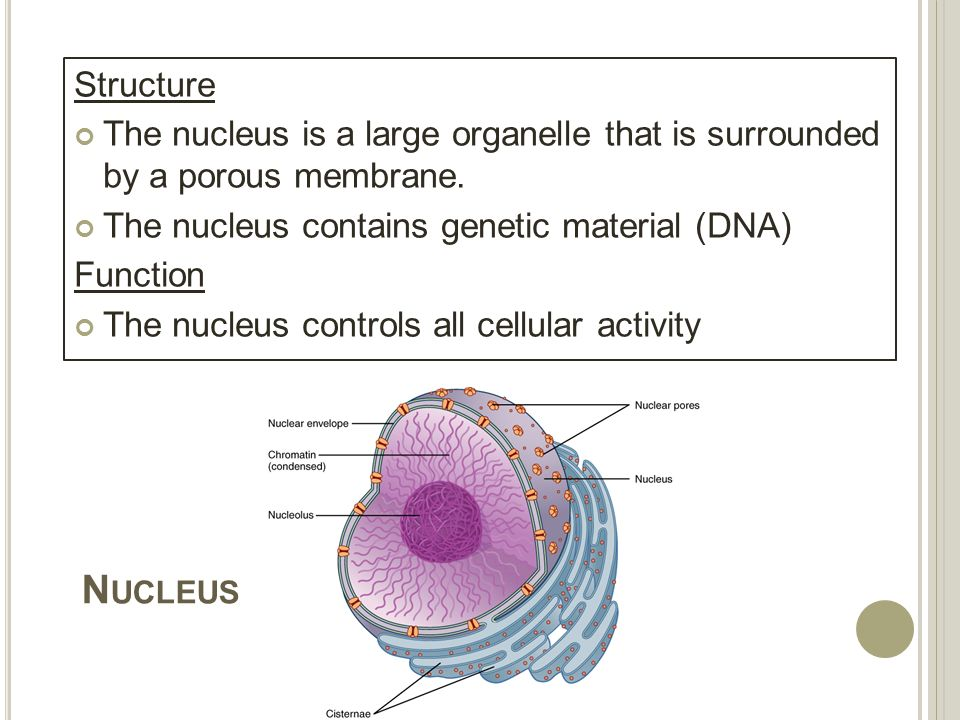 cells: structure & function - ppt download, Human Body
