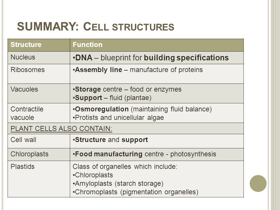 Cells structure function ppt download summary cell structures malvernweather Gallery