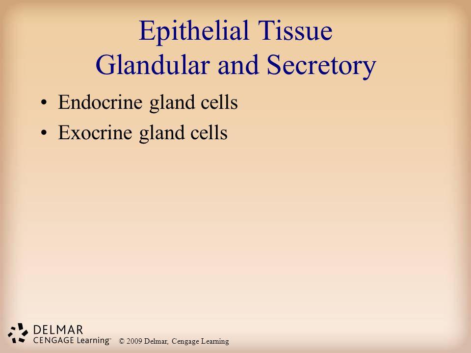Epithelial tissue worksheet answers