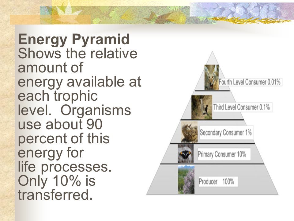 Energy Pyramid Shows the relative amount of. energy available at each trophic. level. Organisms use about 90.