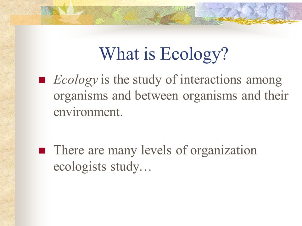 What is Ecology Ecology is the study of interactions among organisms and between organisms and their environment.
