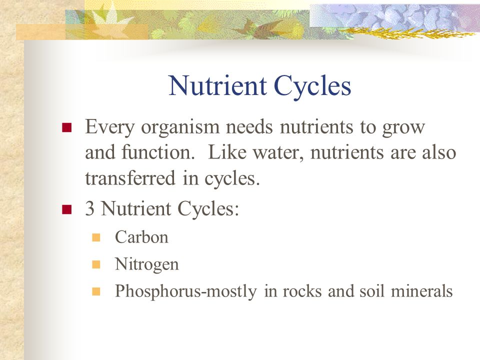 Nutrient Cycles Every organism needs nutrients to grow and function. Like water, nutrients are also transferred in cycles.
