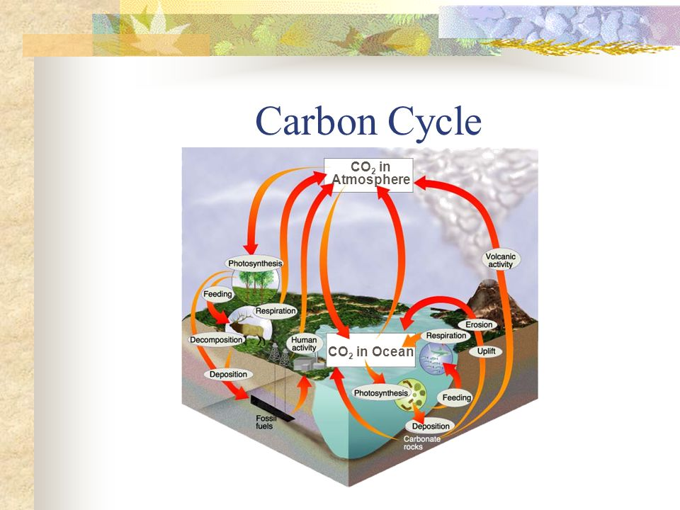 Carbon Cycle CO2 in Atmosphere CO2 in Ocean