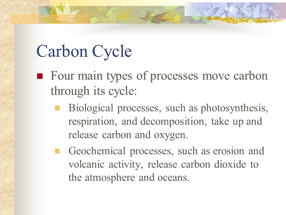 Carbon Cycle Four main types of processes move carbon through its cycle: