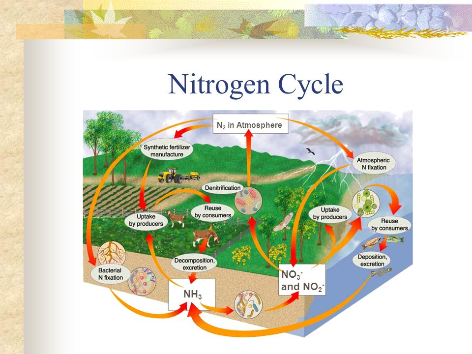 Nitrogen Cycle N2 in Atmosphere NO3- and NO2- NH3