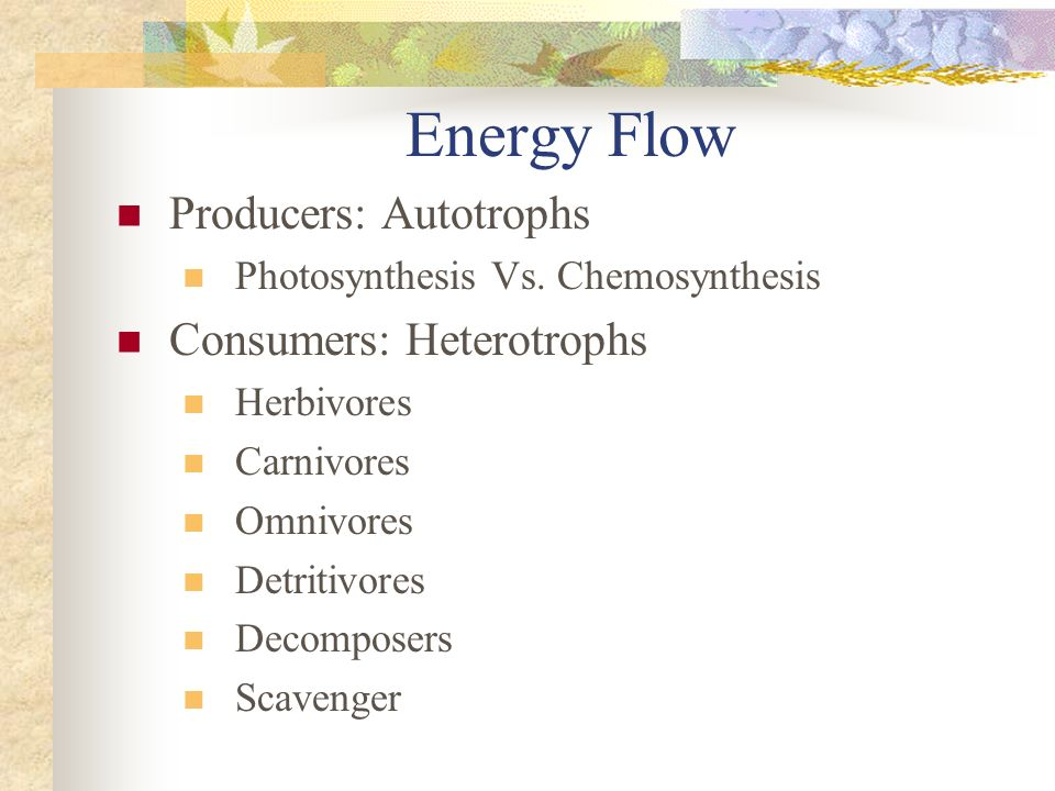 Energy Flow Producers: Autotrophs Consumers: Heterotrophs
