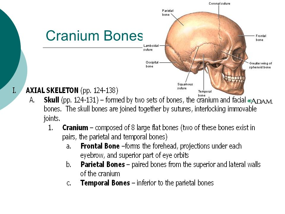 warm bodies bones warm bodies bones flashcard warm up bone ...