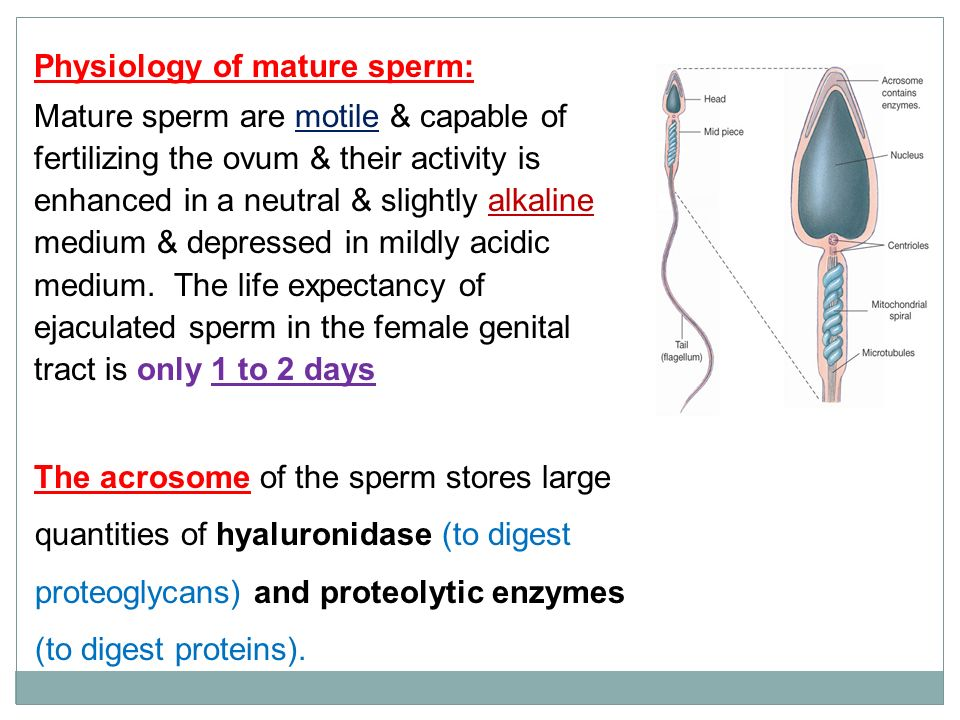Motile of sperm span life