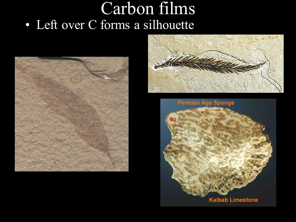 Fossils Sci ppt video online download