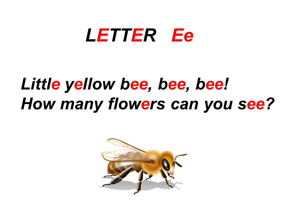 LETTER Ee Little yellow bee, bee, bee! How many flowers can you see