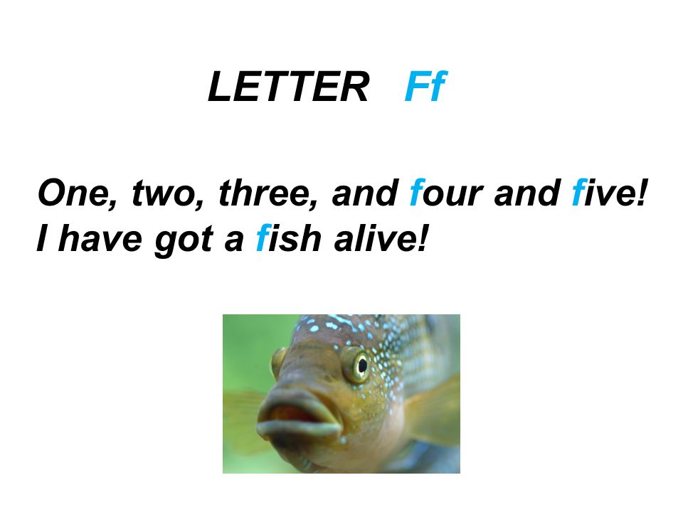 LETTER Ff One, two, three, and four and five! I have got a fish alive!