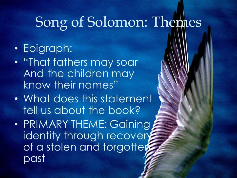 essay on song of solomon English 12: advanced placement literature &  song of solomon  you can't go home again  introduction to paragraphing and short essay formats.