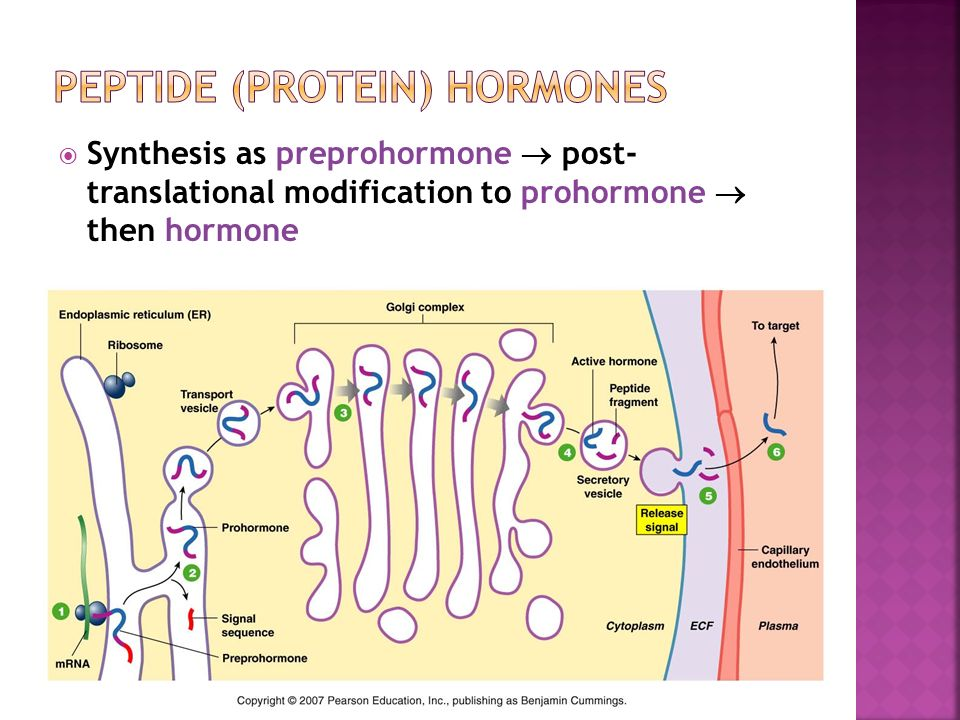 catecholamines steroid hormones