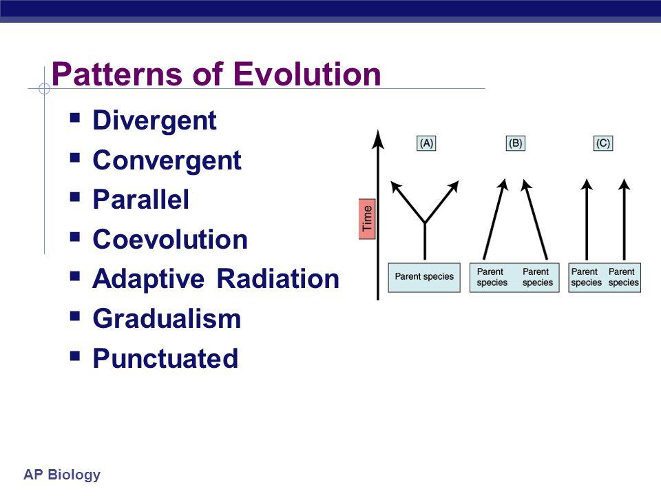 The Evolution of Populations ppt download – Patterns of Evolution Worksheet