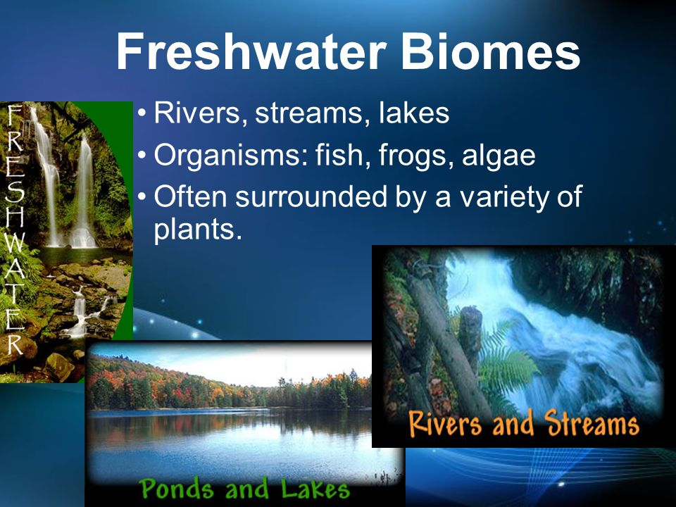 the characteristics of the streams lakes ponds and swamps types of freshwater biomes Key characteristics of lakes and ponds - the bottoms of lakes, ponds and inland wetlands are covered with mud that includes the compared with streams and.