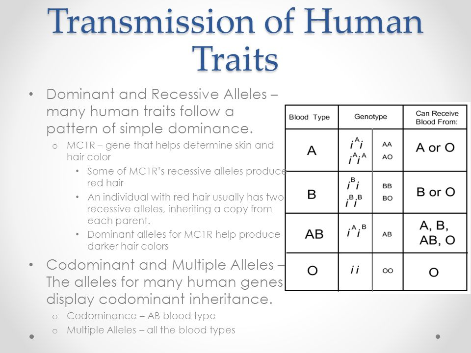 Chapter 14 Human Heredity Ppt Video Online Download