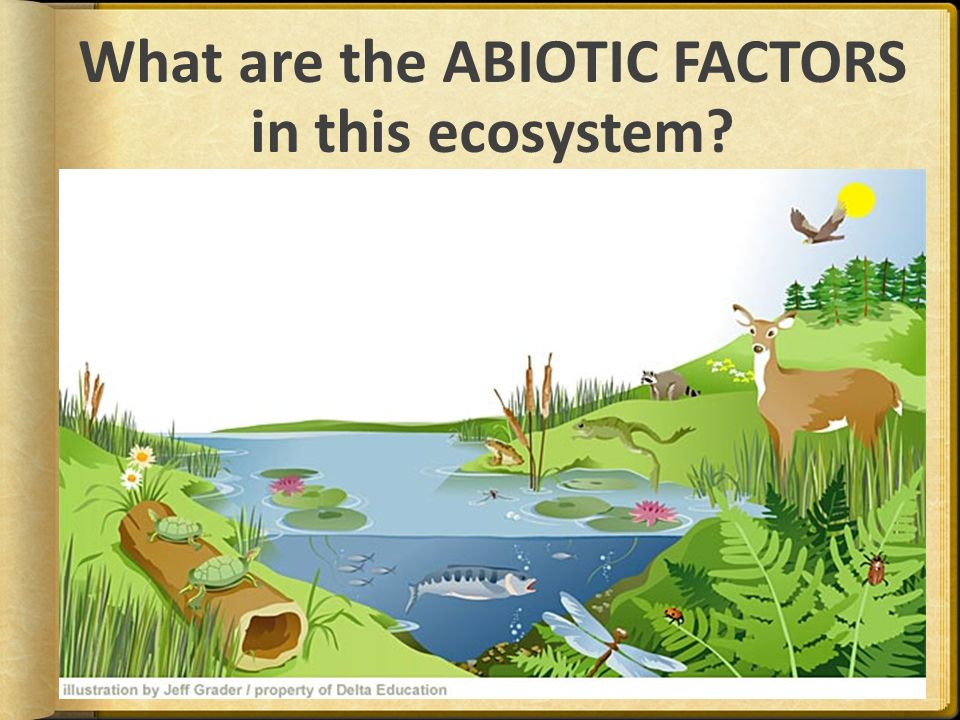 explain how the changes in abiotic