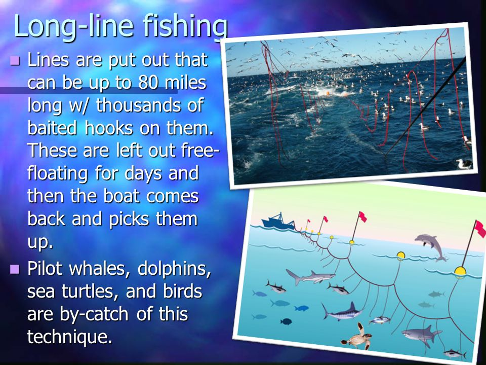 10 3 13 life s work read ch 11 and study for quiz for Long line fishing
