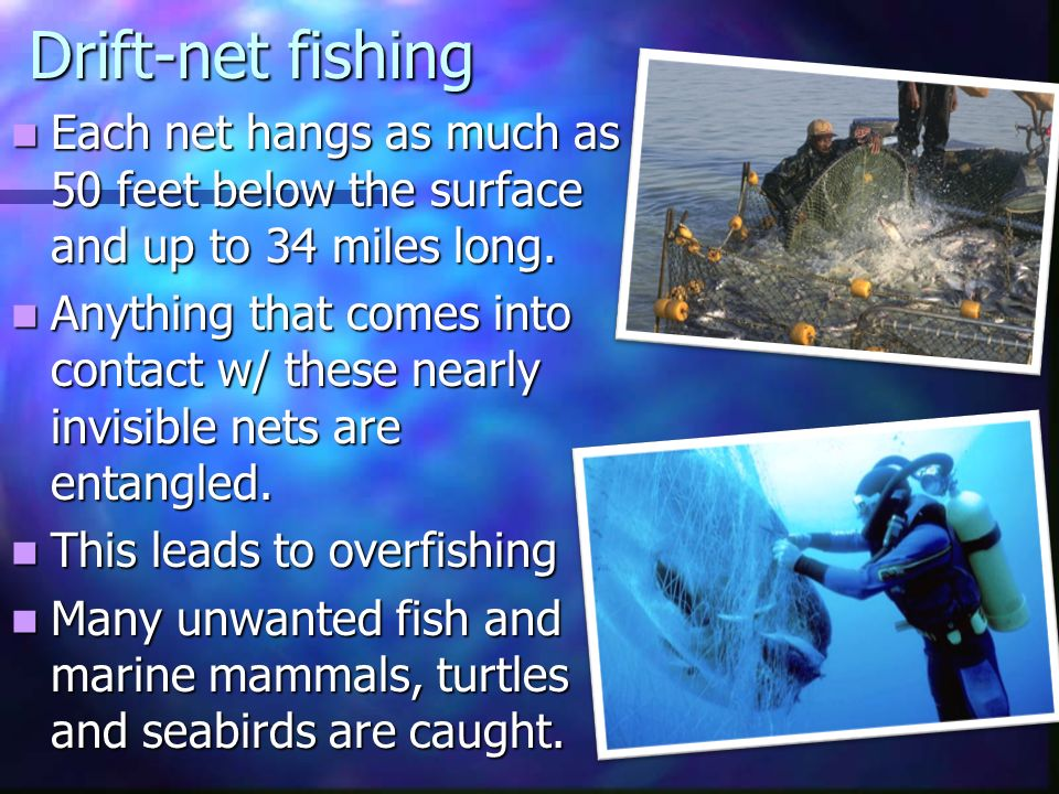 10 3 13 life s work read ch 11 and study for quiz for Drift net fishing