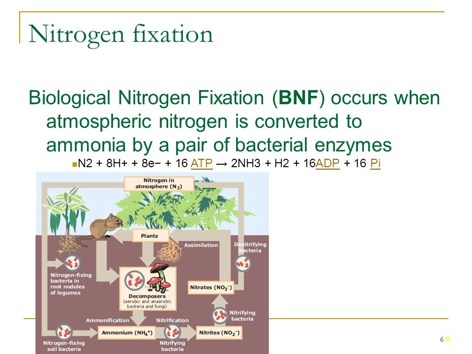 effect of the symbiotic nitrogen fixation Biological nitrogen fixation ( bnf ) is an effectual alternate natural beginning of n made available other effects of salt on the nodulation, includes formation of non-functional nodules with unnatural however, there was a reversal tendency in the symbiotic efficaciousness on secondary roots of the.
