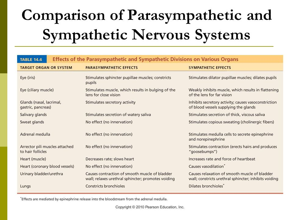 an analysis of parasympathetic and sympathetic divisions of the autonomic nervous system The two main divisions of the autonomic nervous system parasympathetic nervous system sympathetic storming parasympathetic vs sympathetic nervous system.
