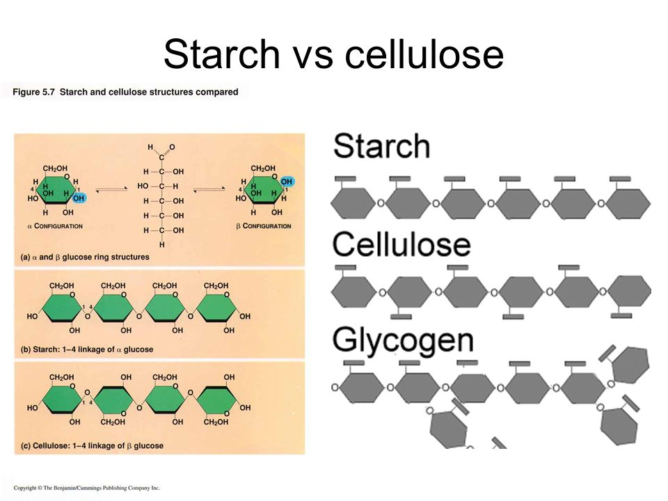 cellulose starch glycogen prion disease and Polymers & monomers 3 biologically important compounds cellulose starch -used for energy storage-plants use starch animals use glycogen.