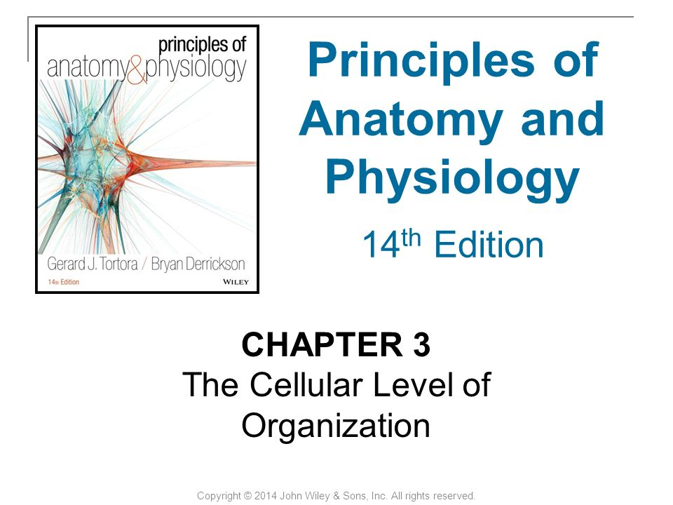 Wunderbar Principles Of Anatomy And Physiology Study Guide Fotos ...