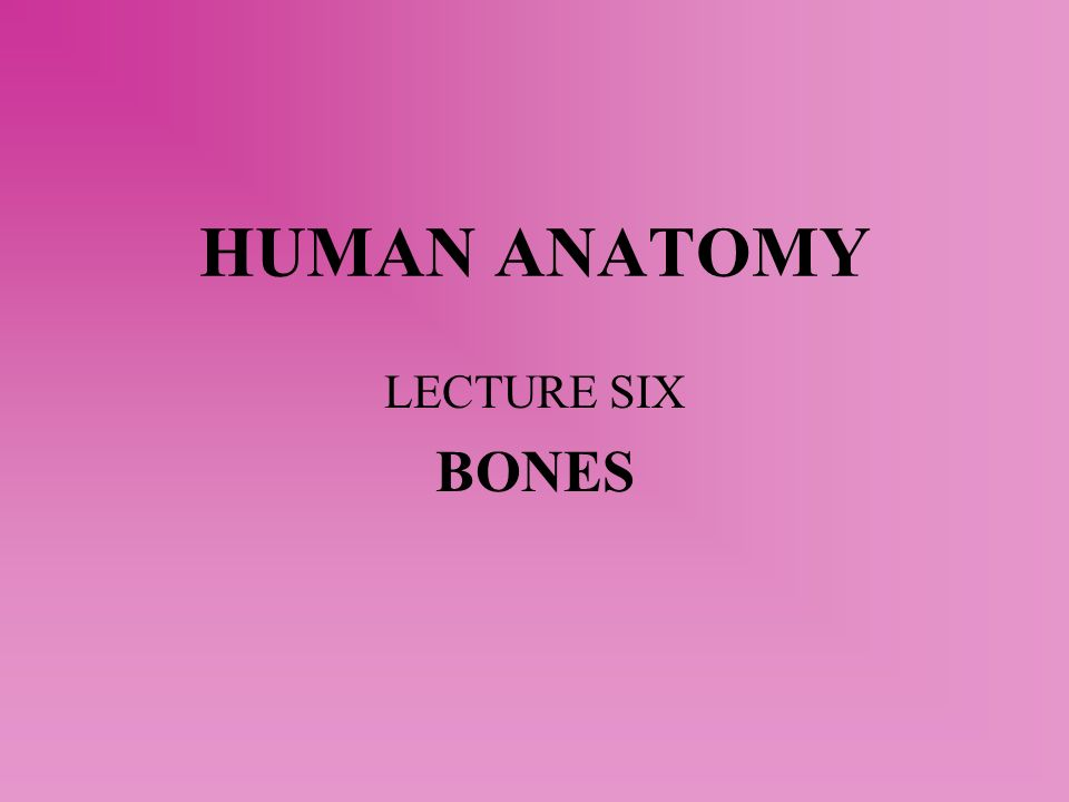 Human Anatomy Lecture Six Bones Ppt Video Online Download