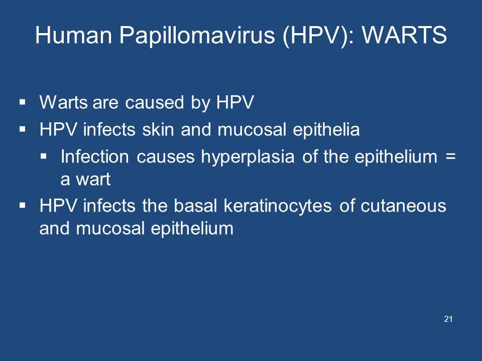 Human Papillomavirus (HPV): WARTS