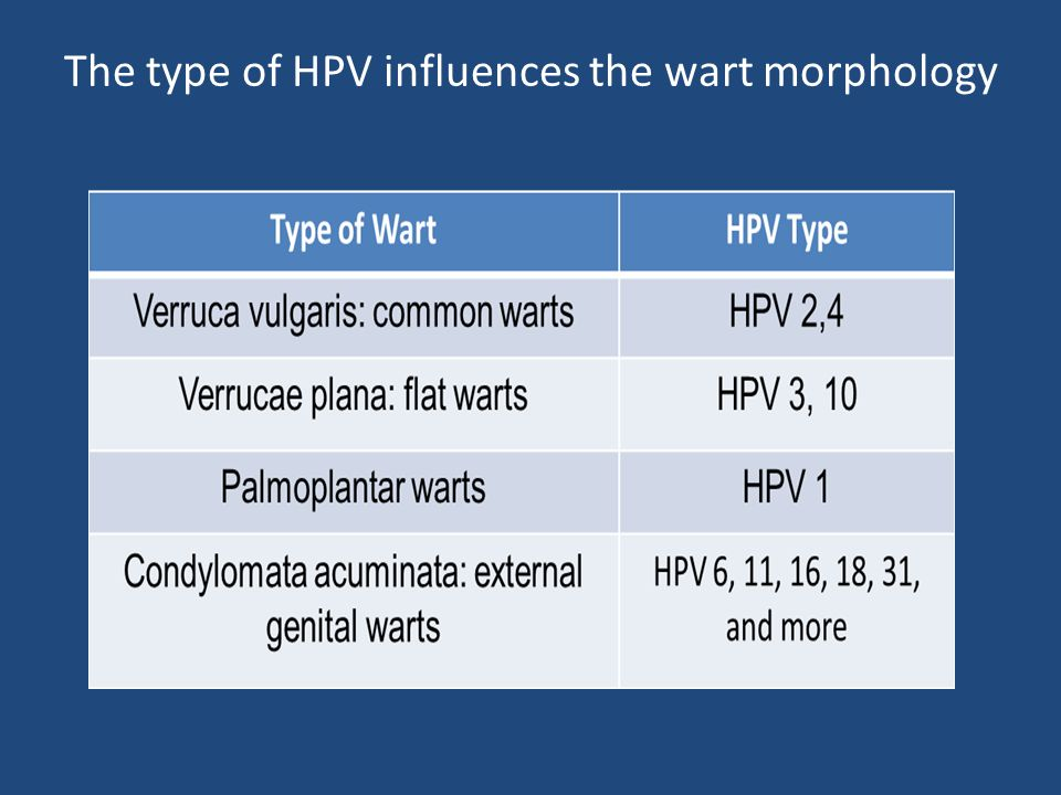 The type of HPV influences the wart morphology