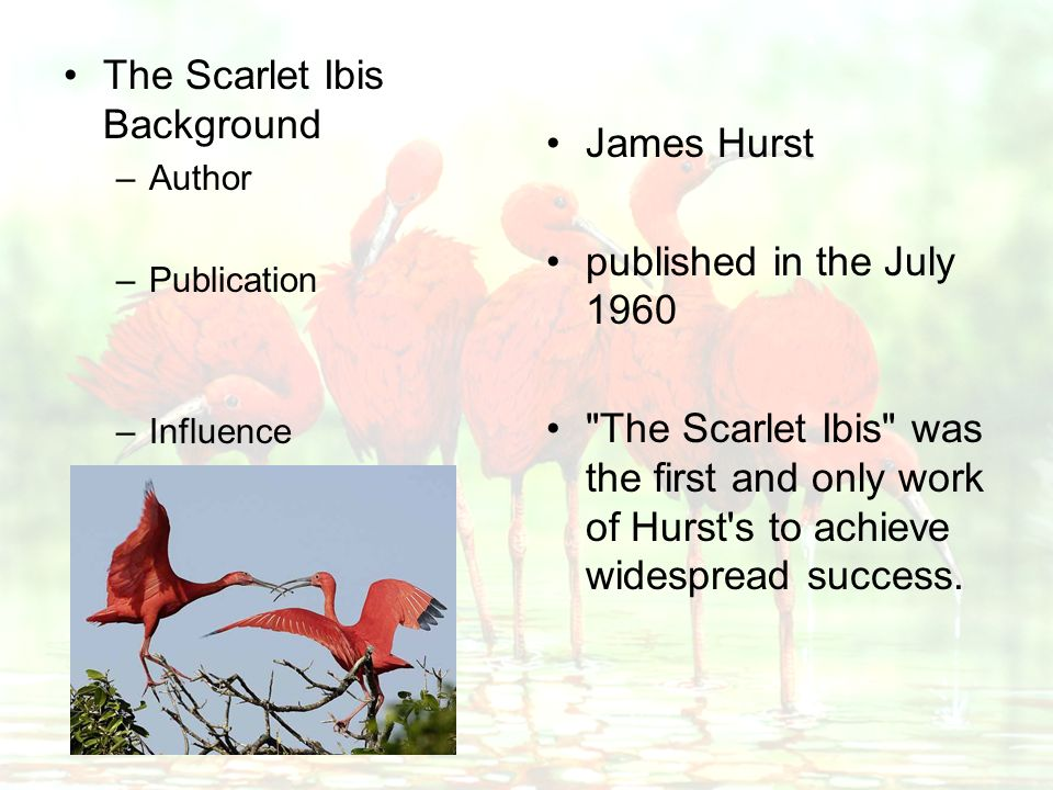 The Scarlet Ibis - The Negative Effects of Pride Essay | Essay