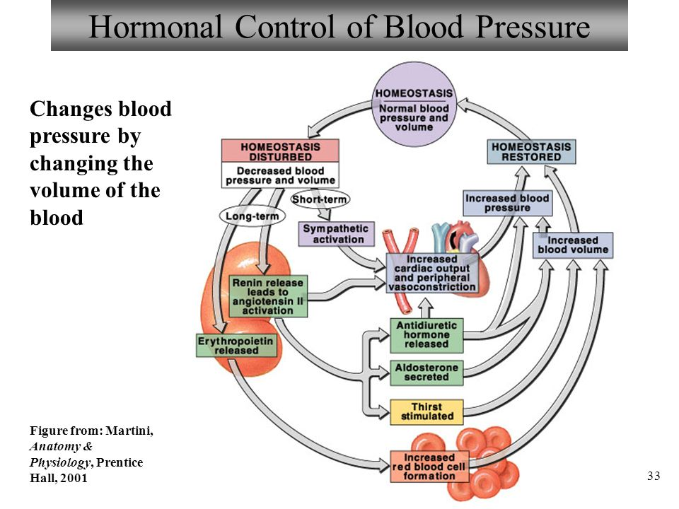 Anatomy of blood pressure