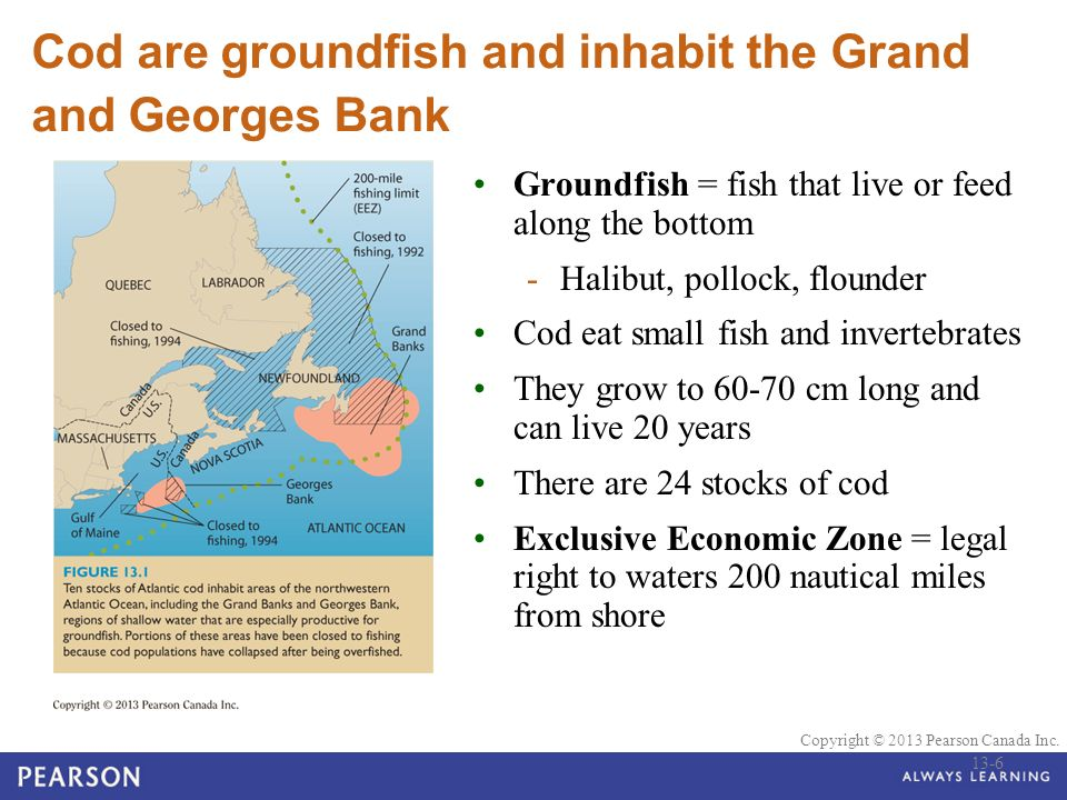 Ppt video online download for Feed and grow fish free no download