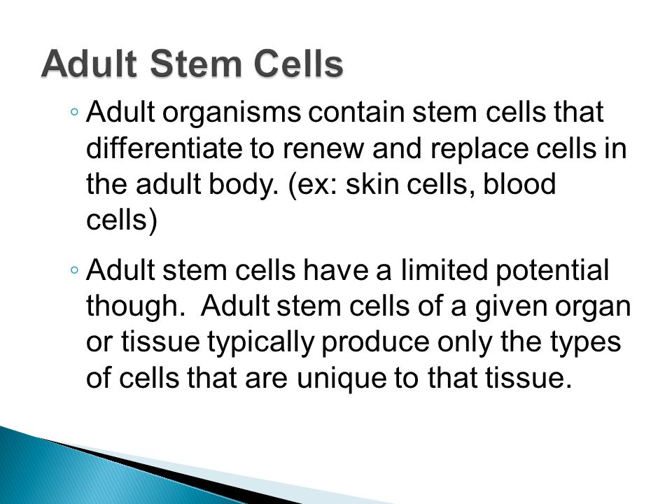 adult stem cells Adult stem cells are extremely valuable and have great potential for future therapies however, these cells are very restricted in what they can do.