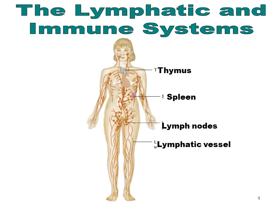 The Lymphatic Immune Systems Ppt Video Online Download