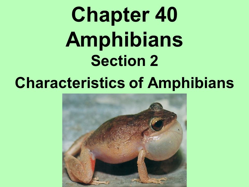 Section 2 Characteristics of Amphibians - ppt download